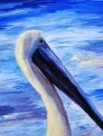 Mr. Pelican Headshot